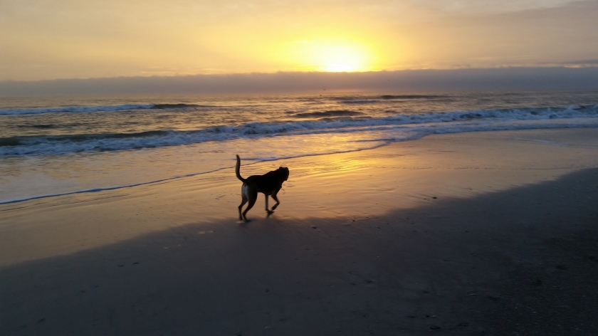 beachdogsunrise